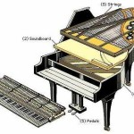 Grand Piano Cross Section
